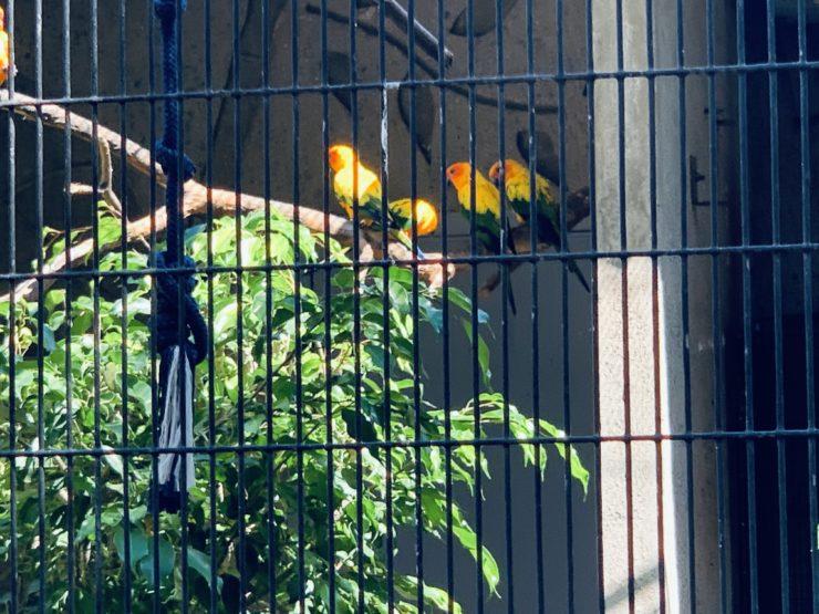 ホノルル動物園 鳥