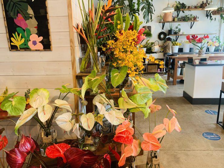 Paiko botanical shop